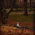 Squirrel #1