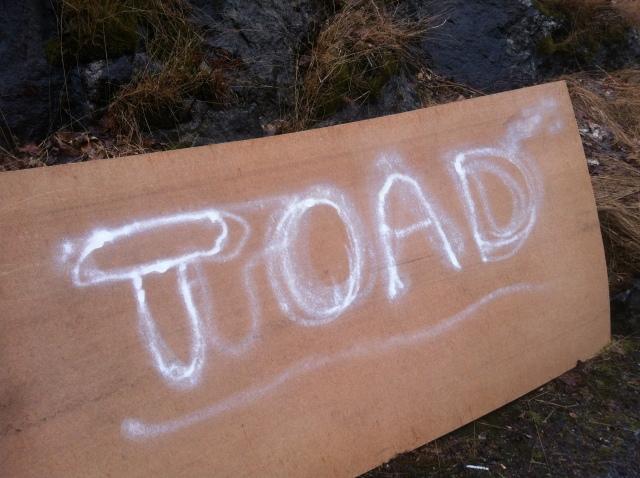 TOAD #3 graffiti